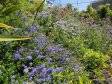 From industrial wasteland to a bio-diverse garden