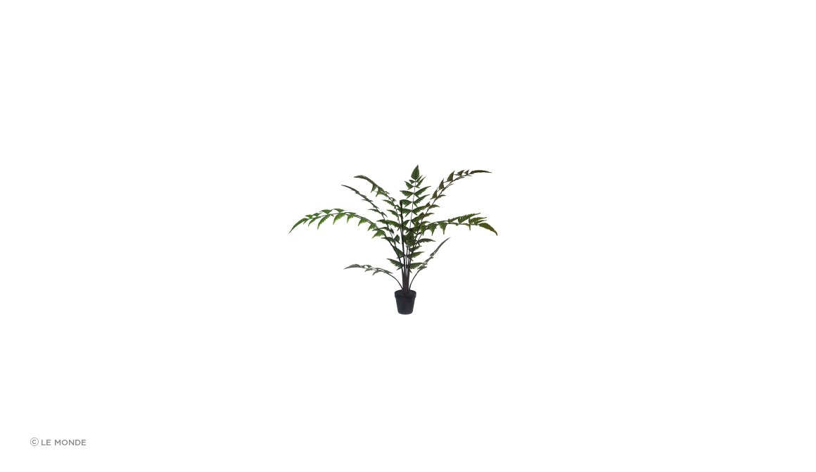 Butterfly Fern Potted